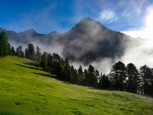 Eine besonnte Alpwiese auf der höhe des Nebelmeers. Oben blauer Himmel, unten im Tal Nebel.