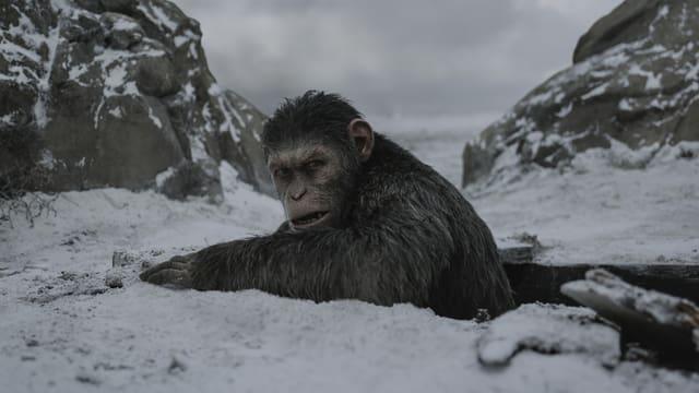 Ein Affe im Schnee