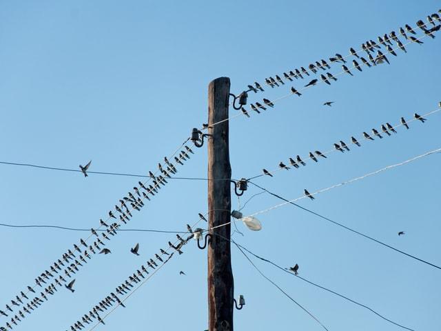 Schwalben auf den Kabeln eines Telefonmastes.