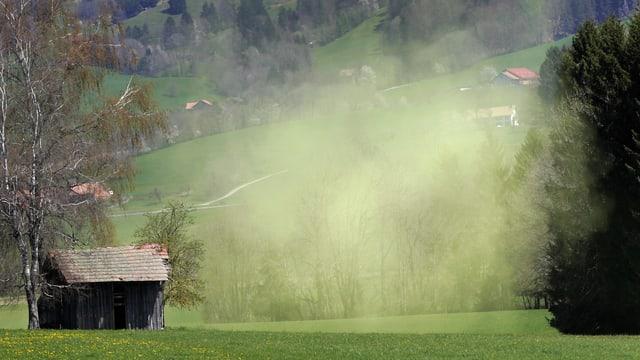 Über einem grünen Feld schwebt eine Wolke aus Pollen.