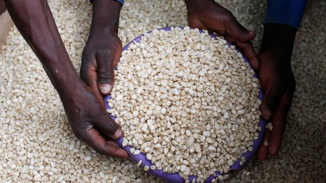 Ein Händler in Malawi verkauft Mais. Auf dem Bild sind vier Hände zu sehen, die eine Schüssel mit Maiskörner füllen. (reuters)