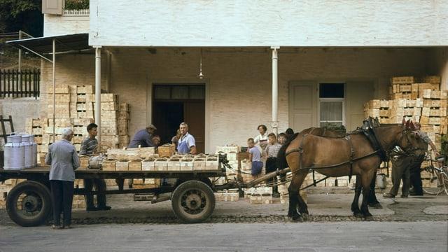 Historische Aufnahme mit Pferde-Fuhrwerk, darauf Kirschen-Kisten geladen
