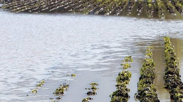 Überschwemmtes Ackerland.