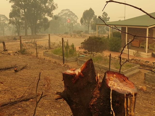 Abgesägte Bäume vor der Farm.