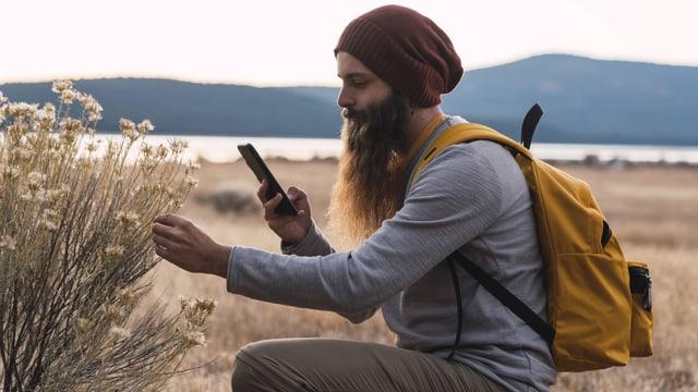 Ein Hippie mit Mütze und langem Bart versucht mit dem Smartphone eine Pflanze zu bestimmen.