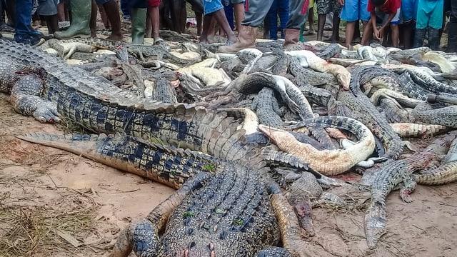 Haufen Krokodilkadaver.