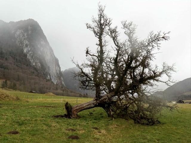 Ein umgeknickter Baum.