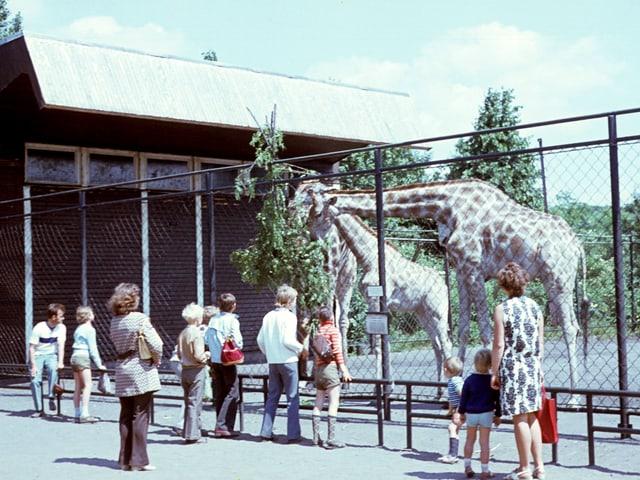 Menschen stehen vor einem Giraffenkäfig.