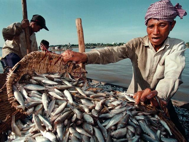 Fischer mit vielen Fischen