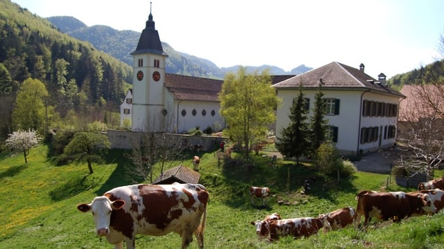 Kleines Kloster, davor Kühe auf Wiese.