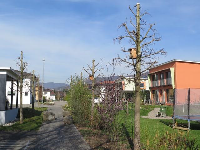 Spazierweg von Bäumen gesäumt, daneben Einfamilienhäuser