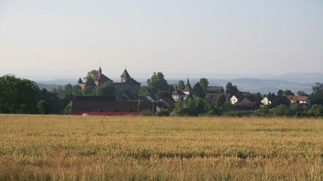 Blick über ein Kornfeld zur Kyburg.