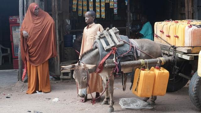 Auf einem Eselkarren im Flüchtlingslager Dadaab werden Wasserkanister transportiert.