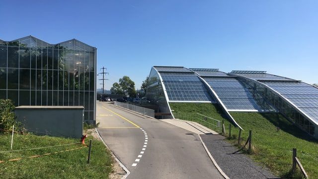 Glashäuser rechts und links einer Strasse.