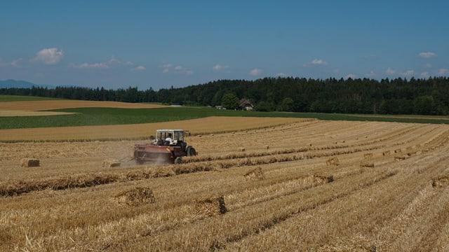 In Kernenried wird die Ernte eingefahren.