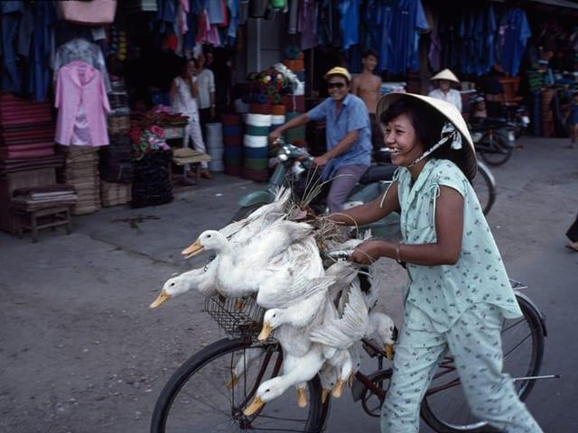Asiatin mit Gänsen auf einem Fahrrad.