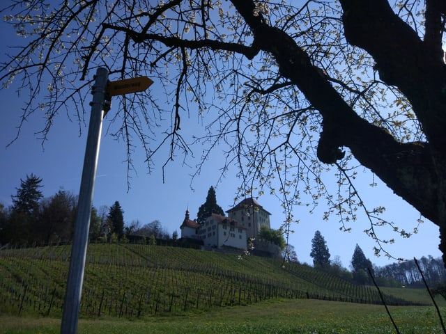 Schloss Heidegg.