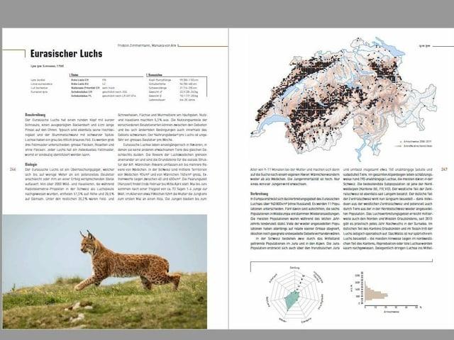"""Paginas dal chapitel luf-tscherver en il cudesch """"Atlas der Säugetiere der Schweiz und Liechtenstein""""."""