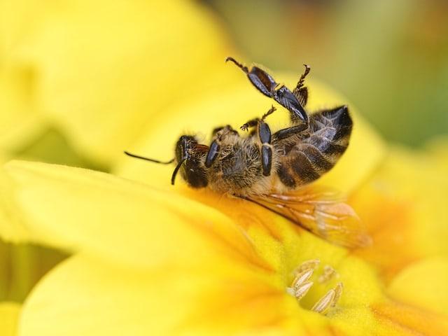 Tote Biene in einer Blüte.