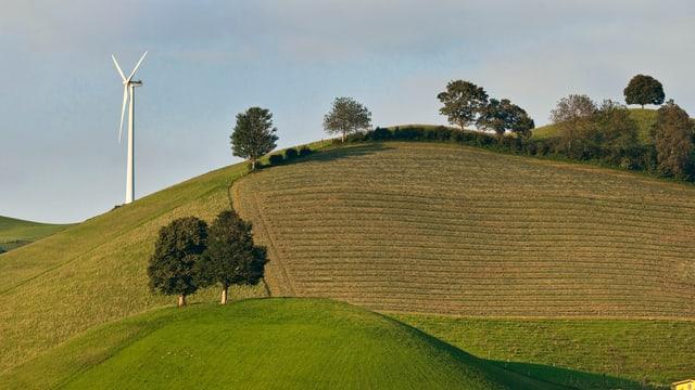 Windrad auf einem grünen Hügel.