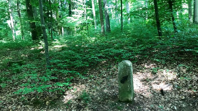 Ein bemooster Grenzstein, dahinter Wald.