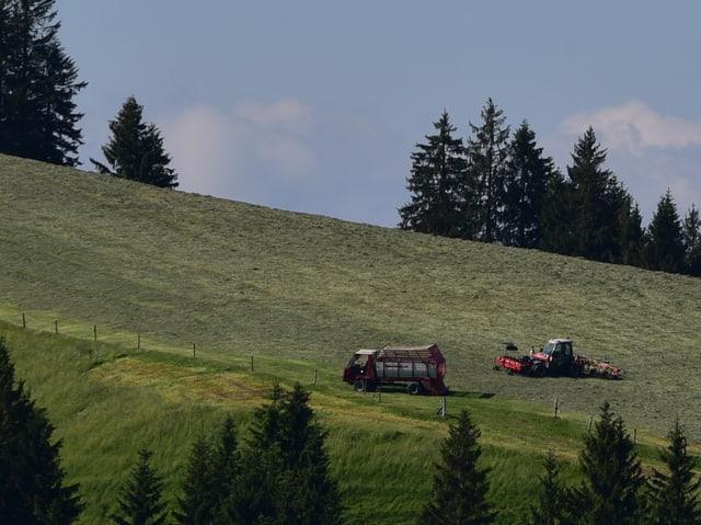 Hügel mit Wiese, die geheut wird mit Mäher und Traktor. Die Sonne scheint vom blauen Himmel.