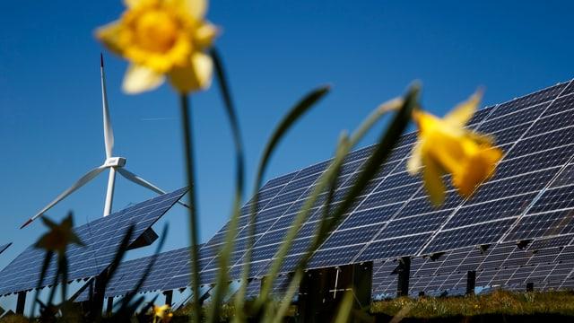 Symbolbild: Solaranlage und Windrad im Hintergrund, im Vordergrund eine gelbe Blume.