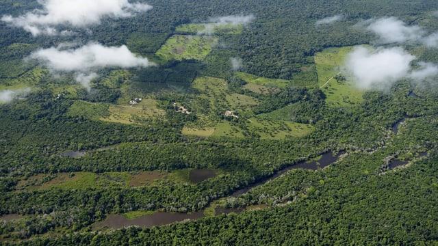 Die Rodung von Urwald zur Umwandung in Weideland richtet in Brasilien riesige Umweltschäden an.