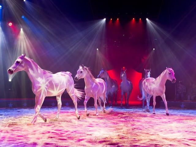 Die traditionelle Pferdeshow begeistert das Publikum jedes Mal neu.