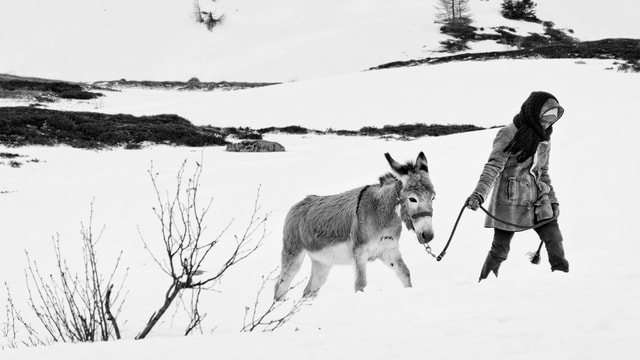 Ein Mädchen geht mit einem Esel durch den Schnee.