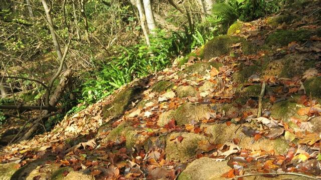 Feuchte Steine in einem Wald.