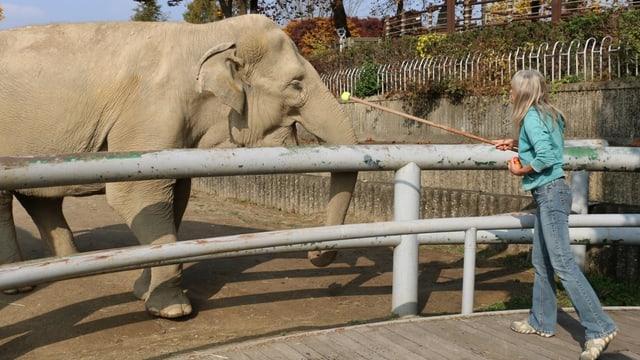 Gail Laule trainiert mit einem Elefanten.