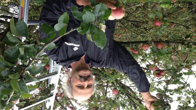 Helmut Müller hat 300 verschiedene Hochstammapfelsorten in seiner Plantage.