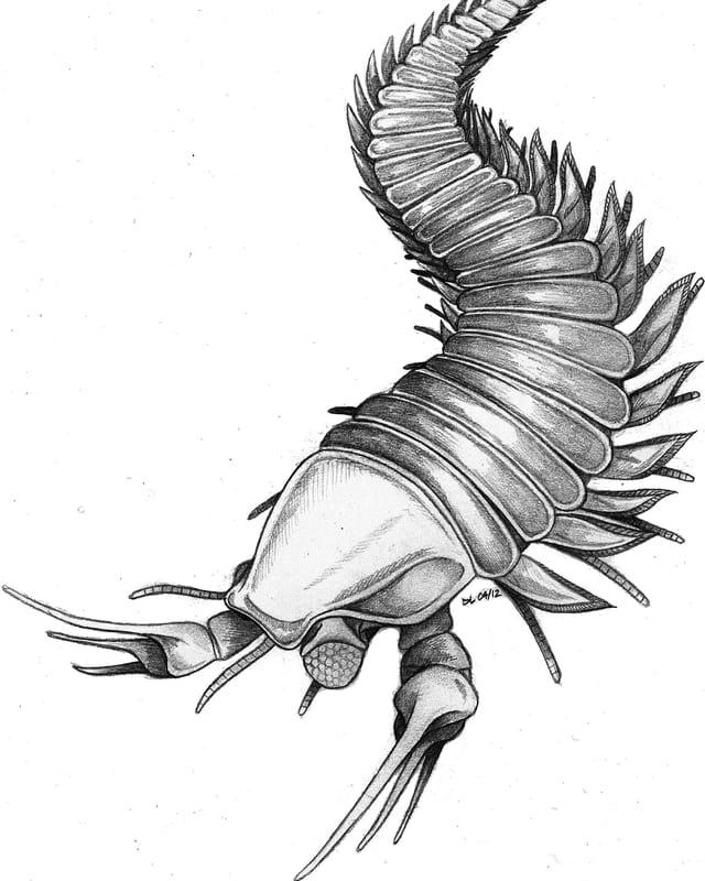 So könnte Kootenichela deppi ausgesehen haben.