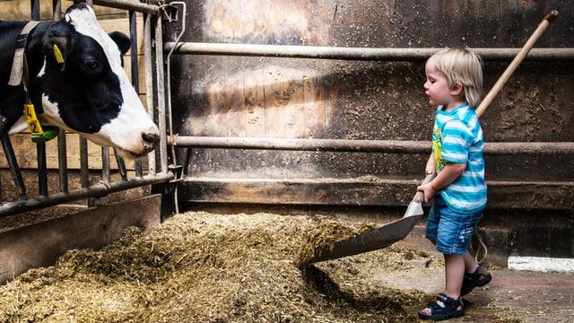 Kleiner Junge schaufelt Futter für Kuh.