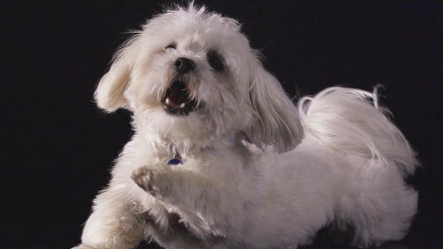 Video «Das geheime Leben unserer Haustiere (2/8)» abspielen