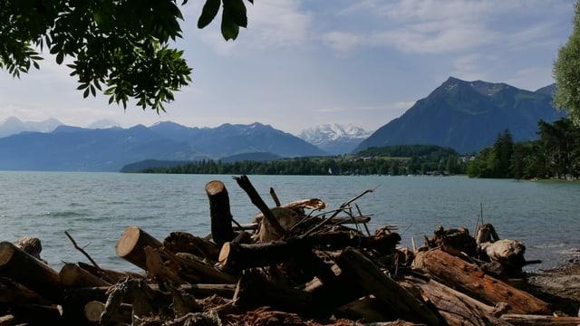 Blick über geschichtete Baumstämme
