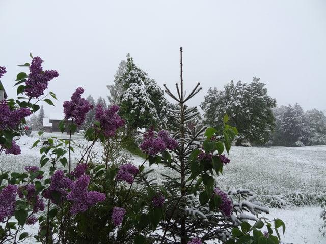 Der Garten ist von einer 5 bis 10 Zentimeter Schneeschicht überzogen.
