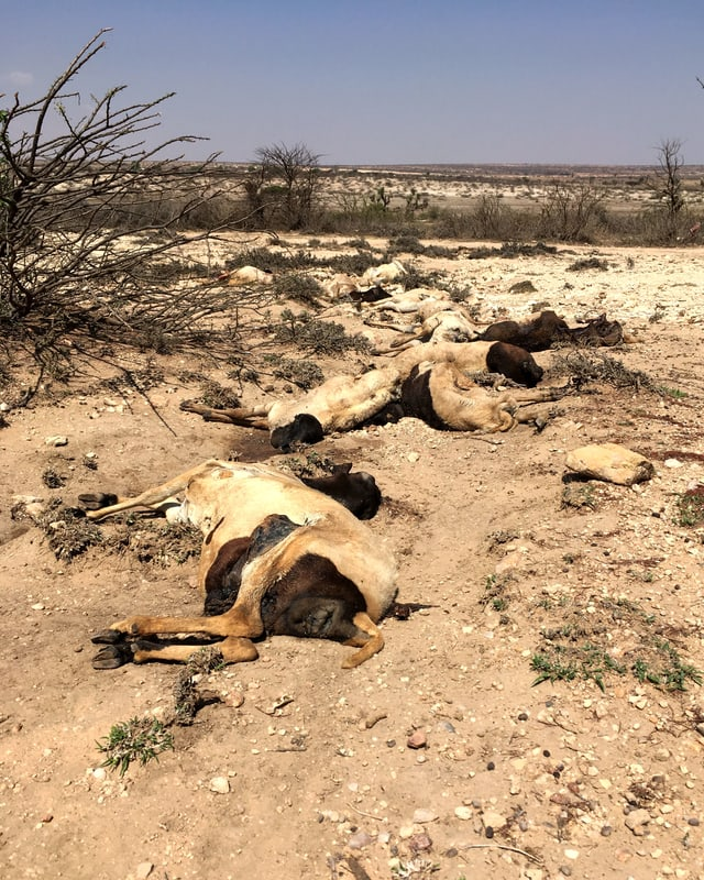 Tote Tiere liegen auf trockenem Boden am Wegrand.