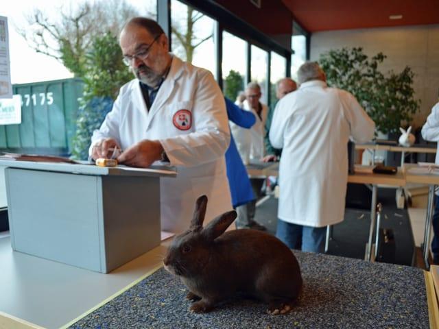 Kaninchen wartet auf einem Tisch, hinten Experte