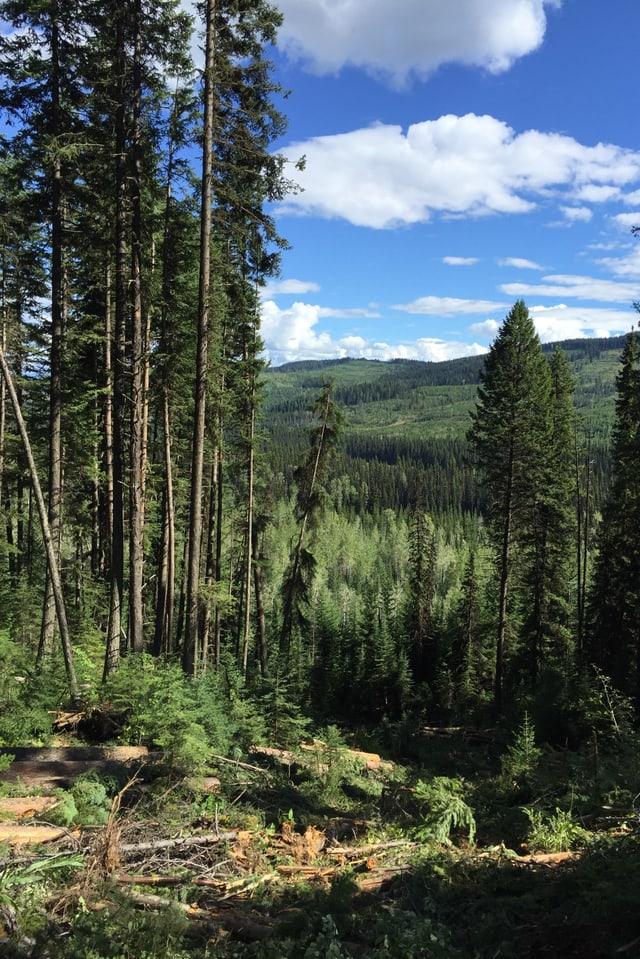 Kanadischer Wald