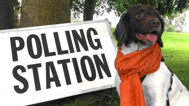 Hund sitzt vor Wahllokal-Schild