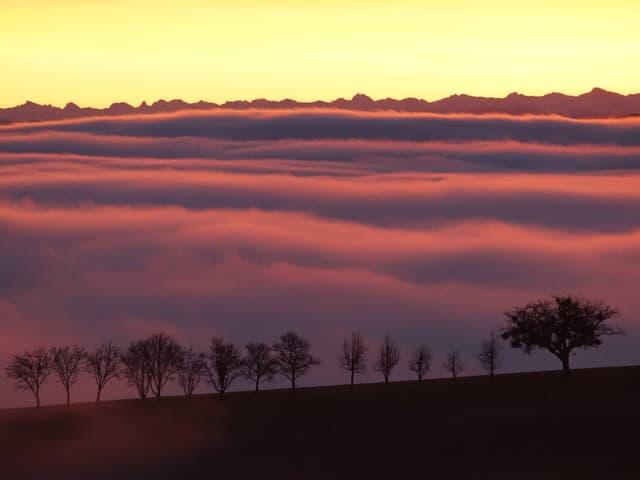 Dämmerung mit gelbem Himmel und rosa Nebelmeer. Am Horizont die Konturen der Alpen, im Vordergrund eine Baumreihe, die aus dem Nebel ragt.