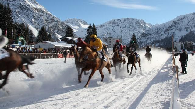 Pferde auf dem Schnee, Bild von einem grüheren Rennen.