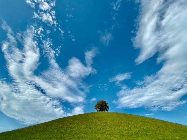 Linde auf Hügel mit blauem Himmel und Wolken