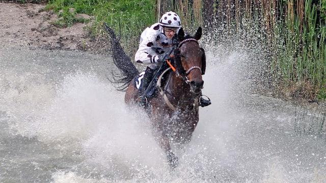 Pferd springt in einen Wassergraben