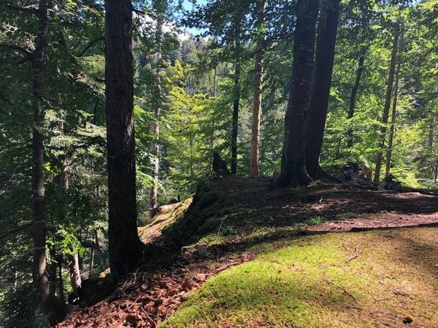 Schwarzwassergraben, Blick in den Wald