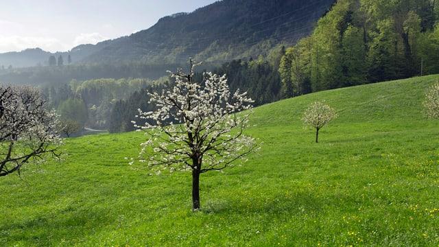 Wiese mit Baum in der Mitte