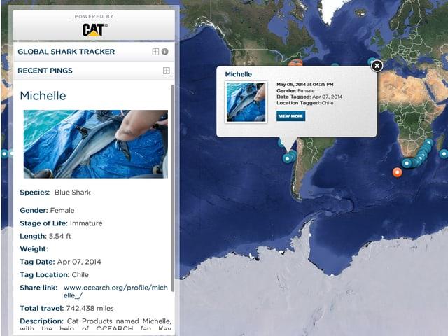 Weltkarte mit Position eines Haifisches, daneben Steckbriefe des Tieres