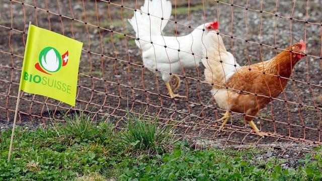 Bio Suisse-Label auf einem Bauernhof mit frei laufenden Hühnern